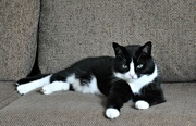 29th Jul 2020 - My grandcat............. Kiki