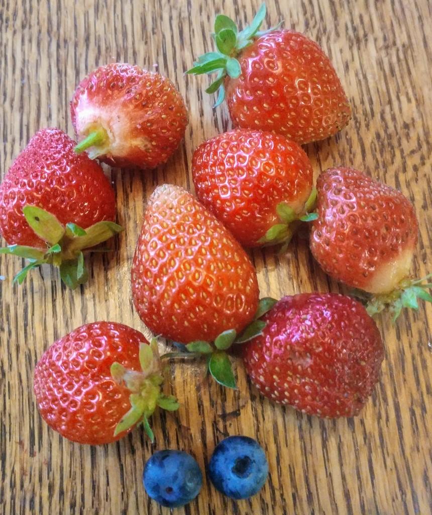Berries by harbie