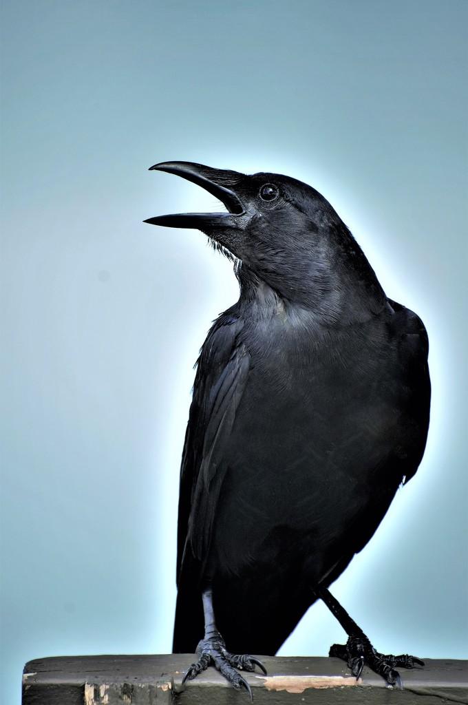 Black Bird by chejja