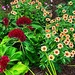 A variety of flowers bloom year-round at the Hampton Park Garden