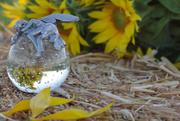 28th Jul 2020 - Sleeping Sunflower Fairy