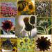 Sunflowers' Evening
