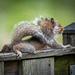 Squirrel Crawl by marylandgirl58