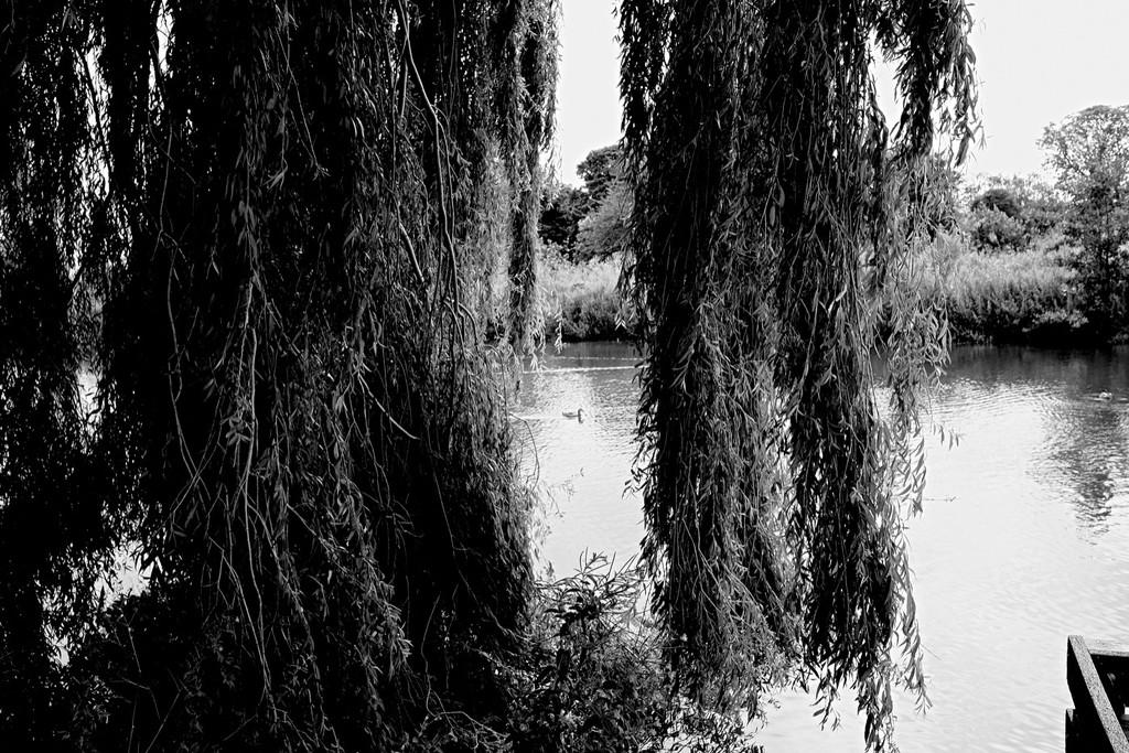 Willow & Duck by allsop