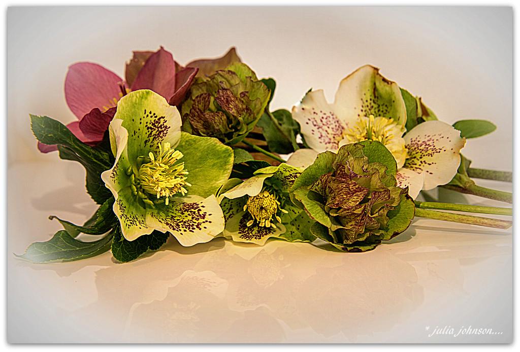 Winter Rose... by julzmaioro