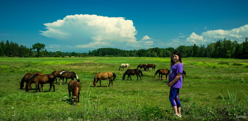 Horse dreams by novab