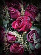 31st Jul 2020 - Dead Roses In The Trash