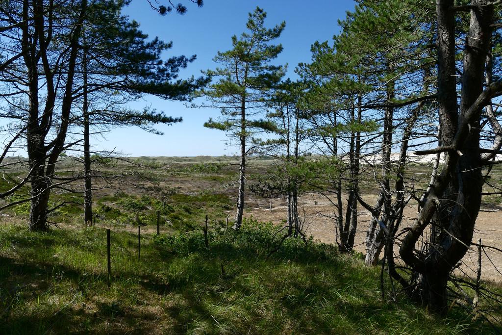 dunelandscape by marijbar