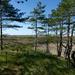dunelandscape