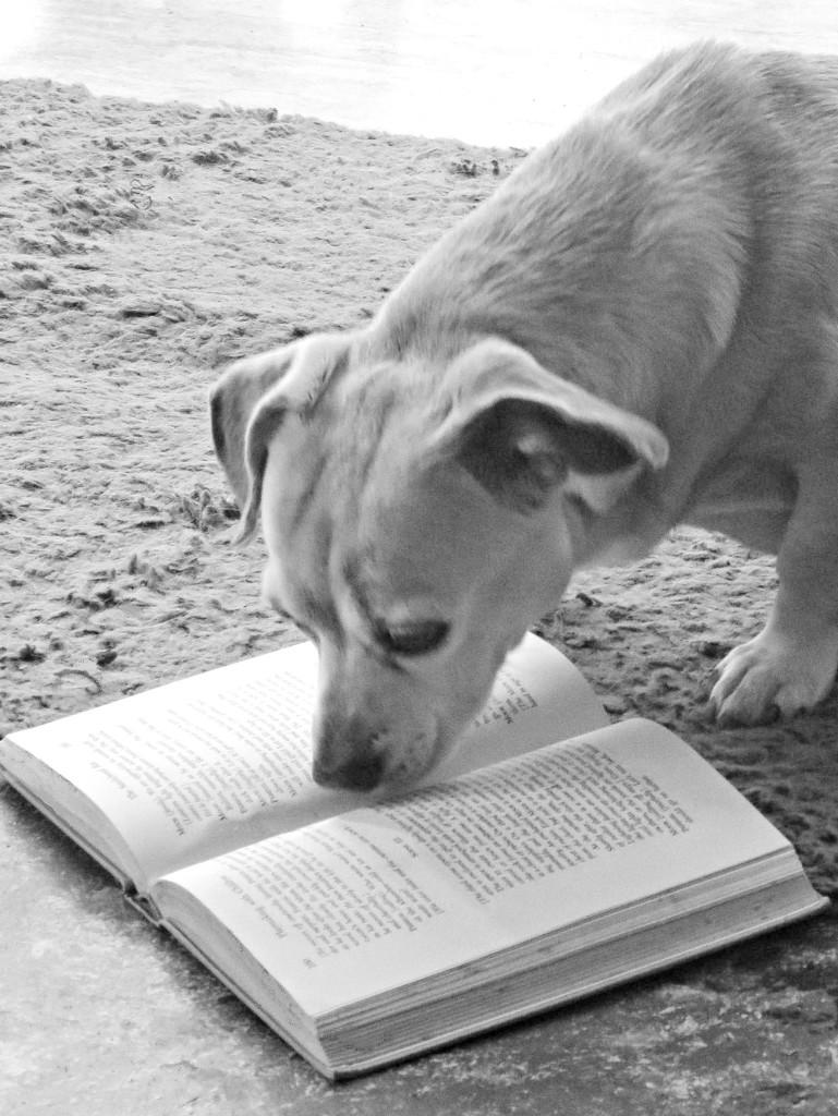 No Wonder She Is So Smart! by grammyn