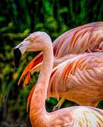 31st Jul 2020 - Flamingo Friday '20 20