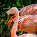 Flamingo Friday '20 20