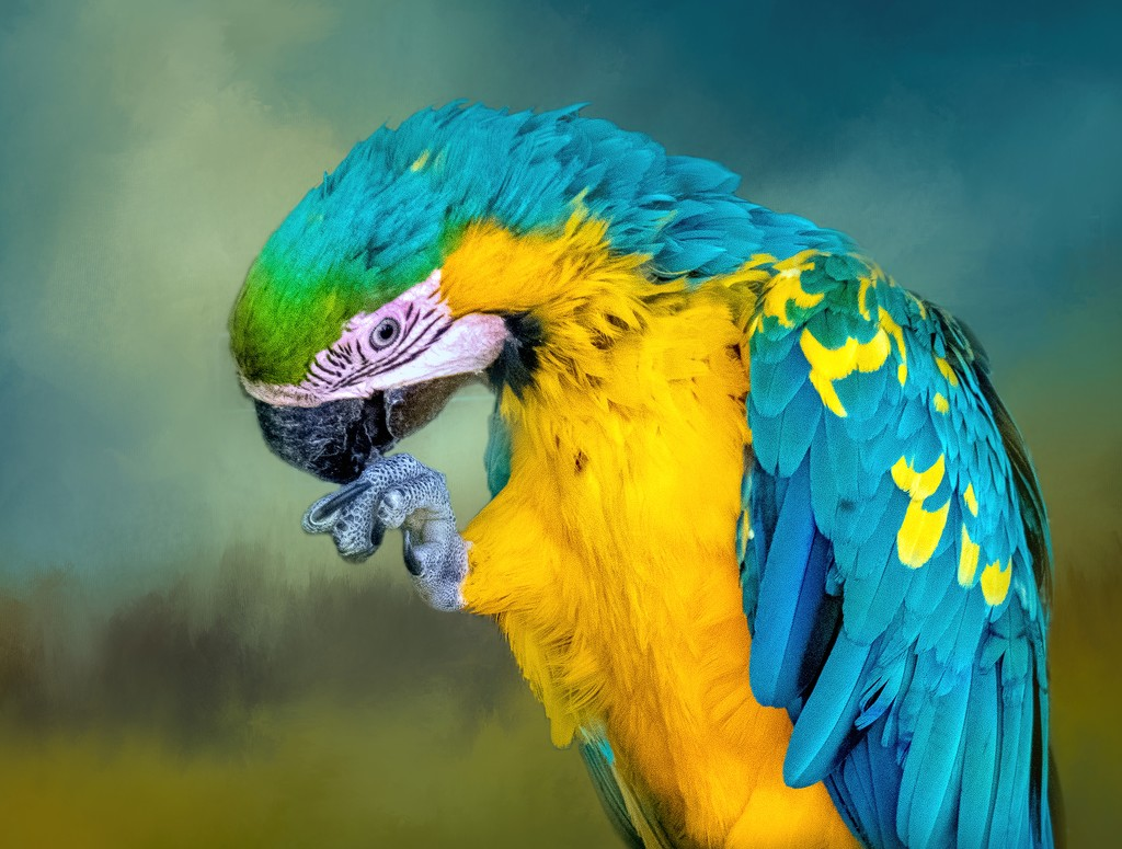 Blue and Gold Macaw  by ludwigsdiana