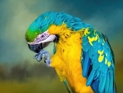 1st Aug 2020 - Blue and Gold Macaw