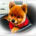 Gizmo the Bikey dog...