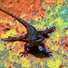 Harmonic Lizard