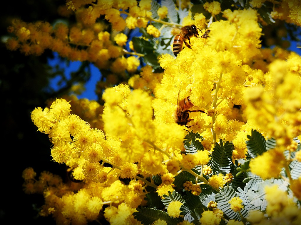 Busy Bee`s by mickeymusic