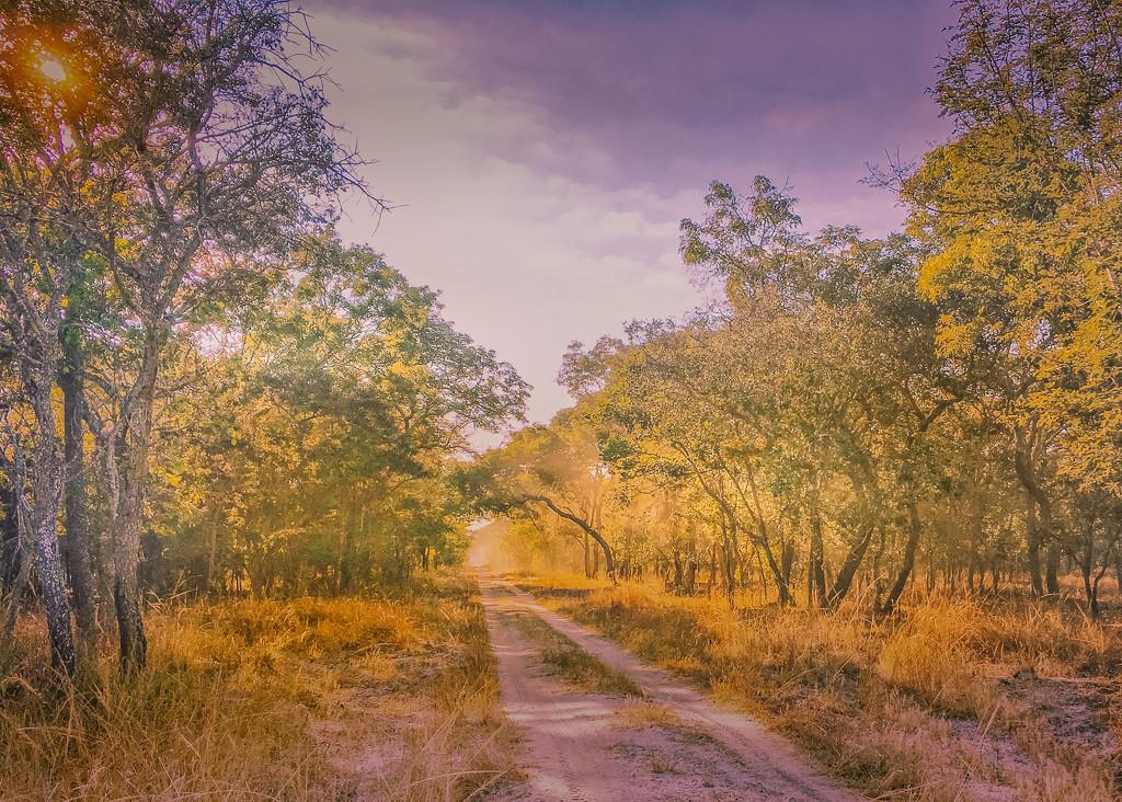 A Pretty Road by zambianlass