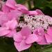 Bee happy..