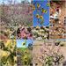 Wildflowers of the Pilbara Region by leestevo