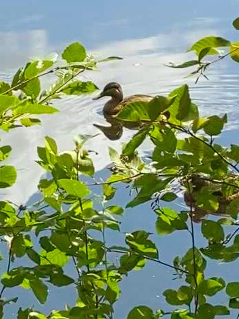 Duck yes kind? by joansmor