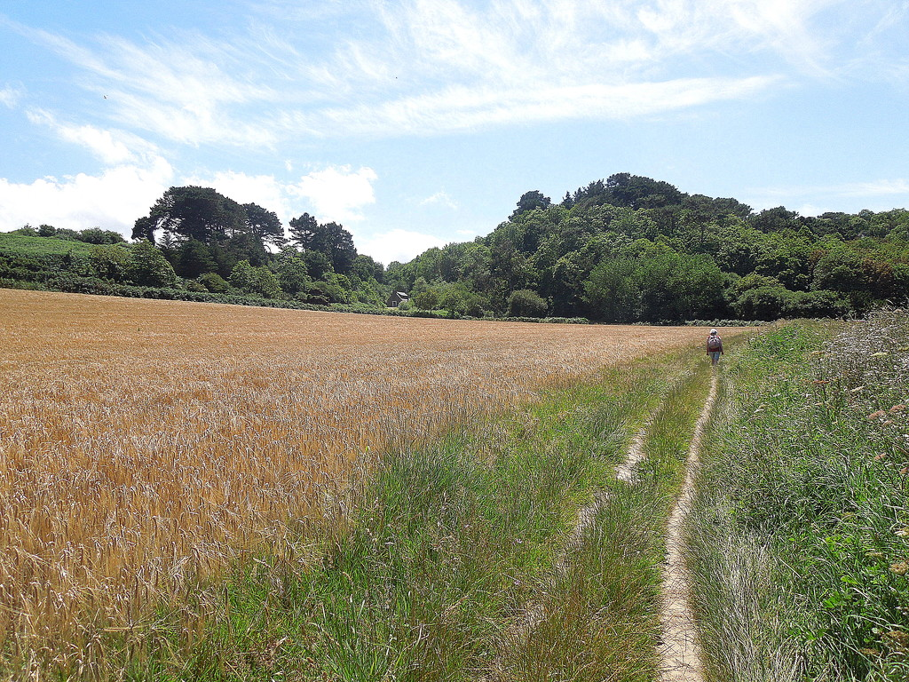Along the GR34 trail : the fields by etienne
