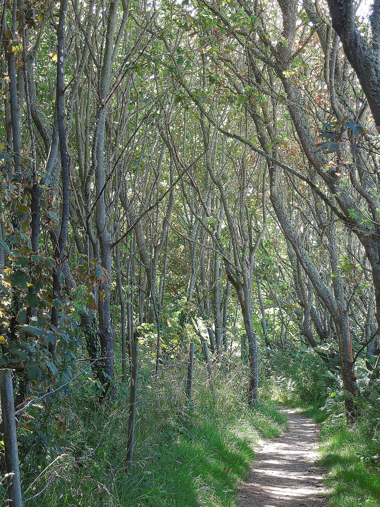 Along the GR34 trail : the woods by etienne