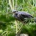 Heron Spotting Again by carole_sandford