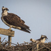Osprey and the Next Generation