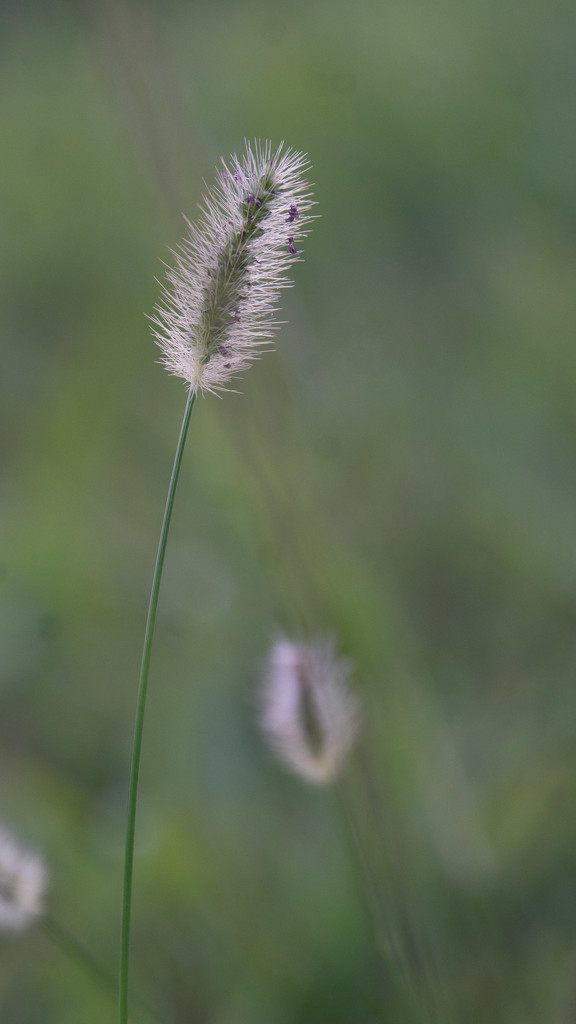 Grass in the sun by randystreat