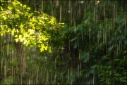 2nd Aug 2020 - Have You Ever Seen the Rain