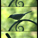Bird collage 2
