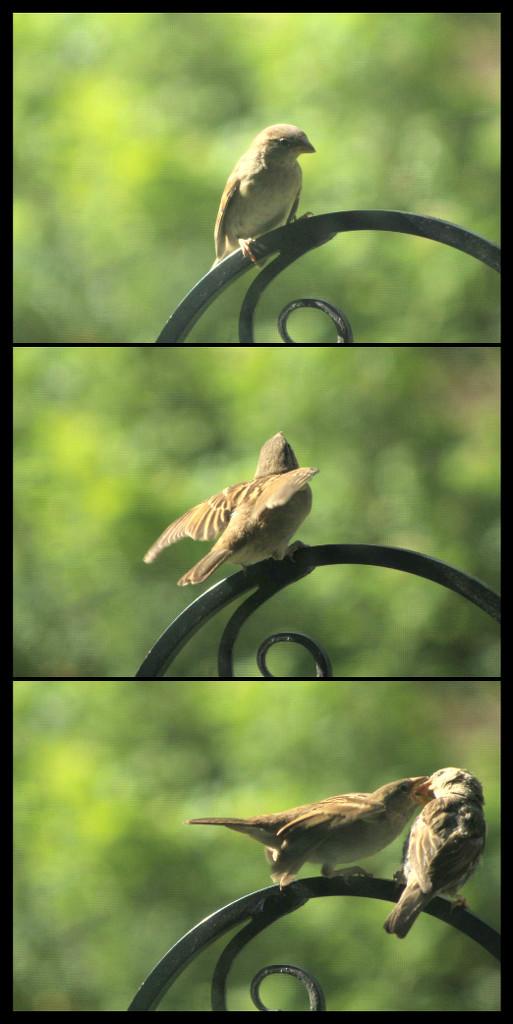 Bird collage 1 by mcsiegle