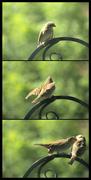 2nd Aug 2020 - Bird collage 1