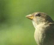 1st Aug 2020 - Bright-eyed Bird