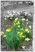 2nd Aug 2020 - First Daff's