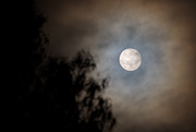 3rd Aug 2020 - Almost a Full Moon.