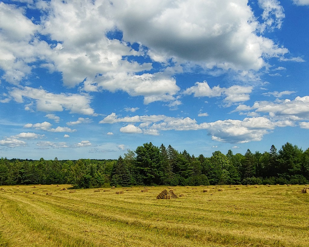 Perfect Day For Haying by kfpartist