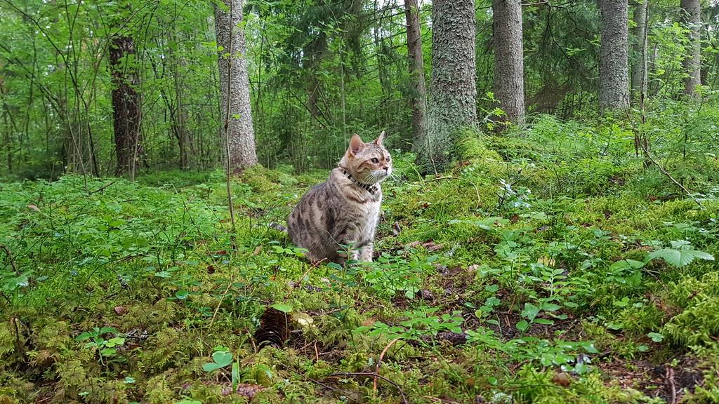 Green forest  by katriak