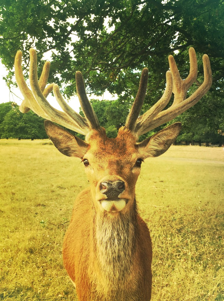 Oh deer! by andycoleborn