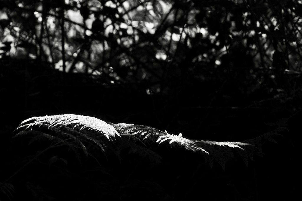 Ferns, sunlit by s4sayer