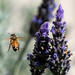Bee season has started