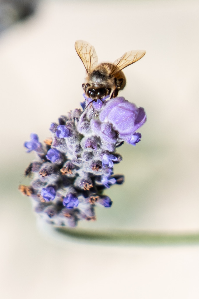 Bee's are a buzzing  by sugarmuser