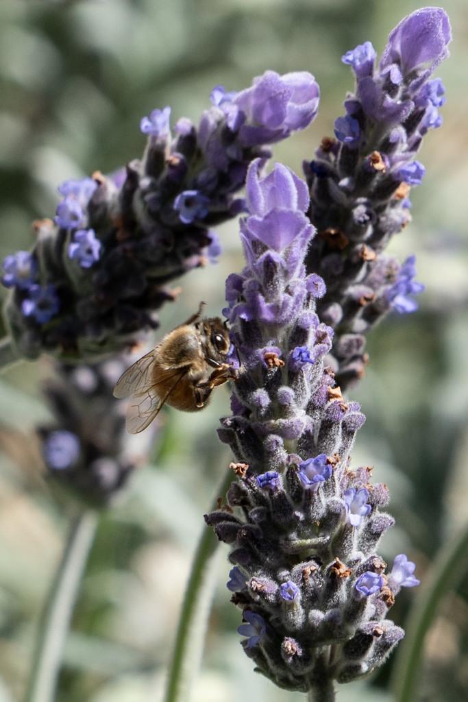 buzzing around by sugarmuser