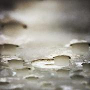 3rd Aug 2020 - Chalky rain maker