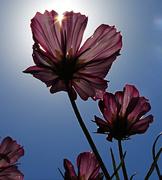 4th Aug 2020 - Summer Sun