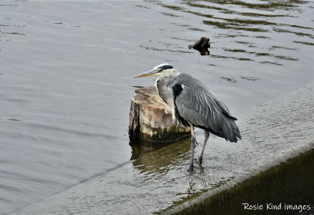 Fishing by rosiekind