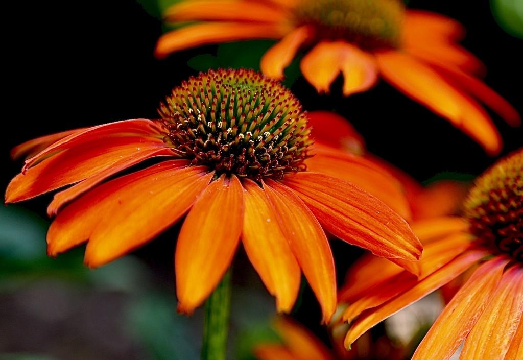 A Blaze of Orange by carole_sandford