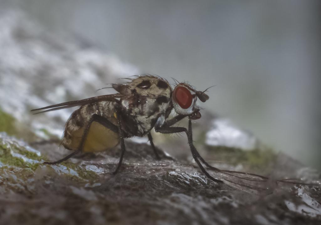 Teeny Tiny Spotty Fly by ilovelenses
