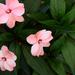SOOC Flowers